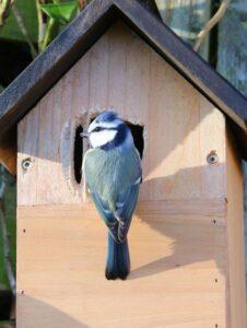 Maak een huisje voor de vogels! @ Pop-up Parkhuis