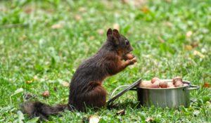 Natuuratelier: eten uit de natuur @ Pop-up Parkhuis