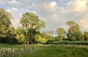 Bomenexcursie door Elisabeth Groen @ Parkhuis