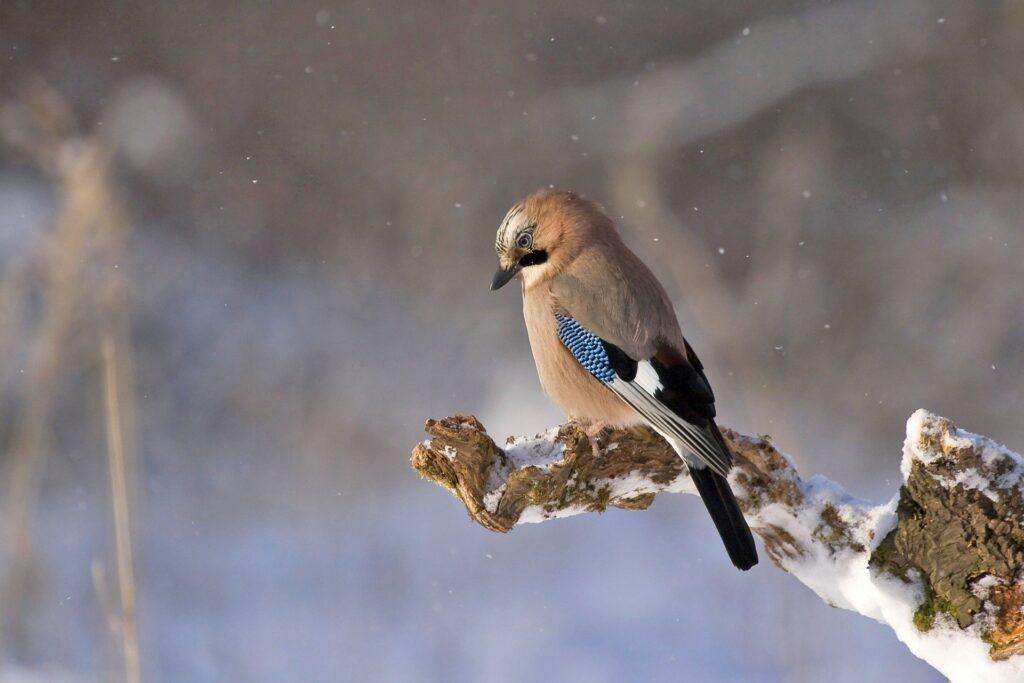 Kleutersafari: vogels in de winter @ Parkhuis